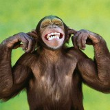 Monkey Brain: The Inability to Calm the Mind